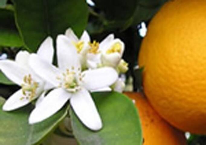 Residenza Fiori d'arancio