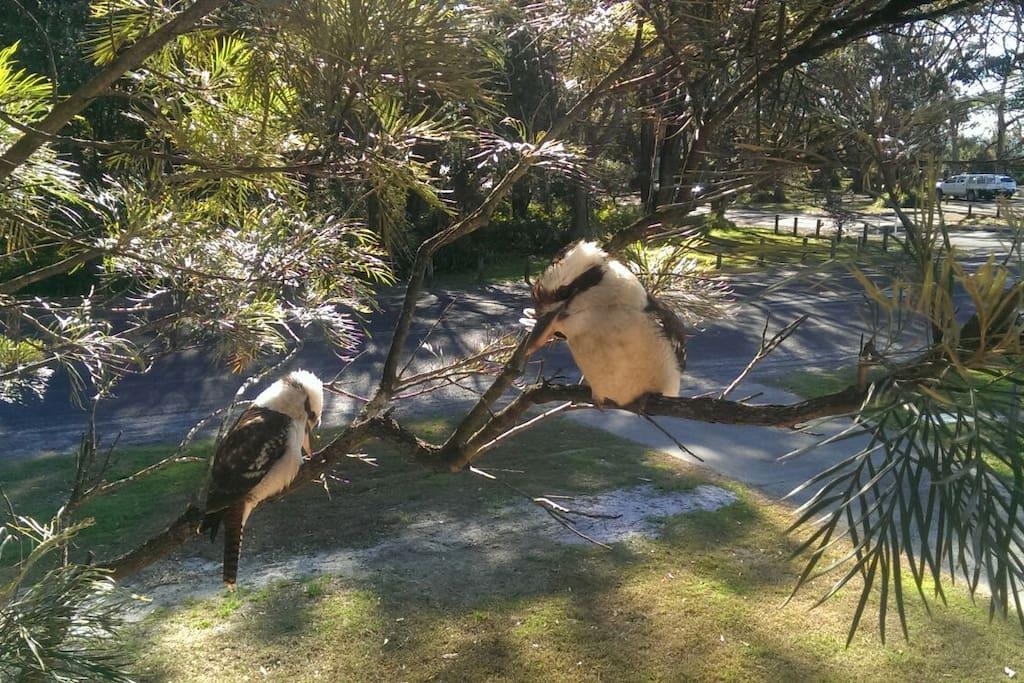 You wont need an alarm clock !!! Kookaburras will take care of that.