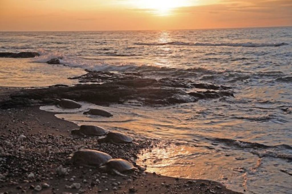 Sunset with Sea Turtles