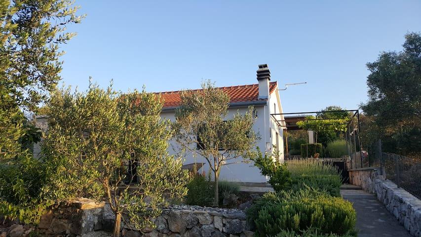 Fisherman´s house Nenić, island Žut, Pristanište