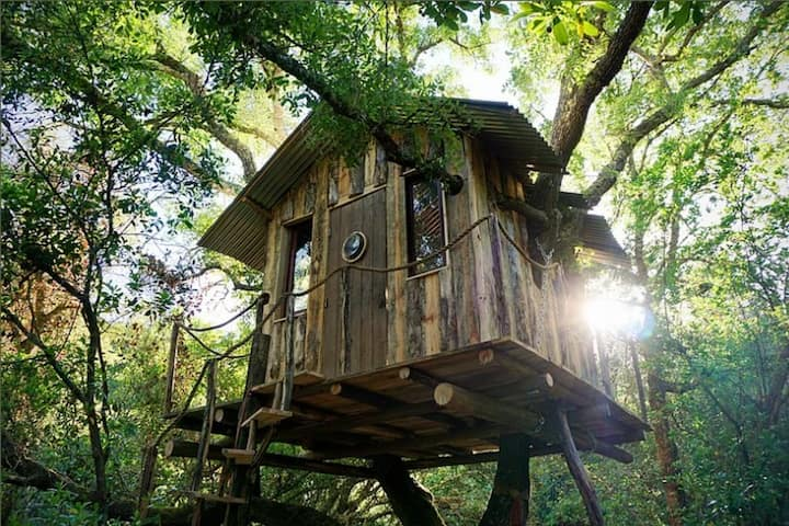 Raw Romantic Tree House