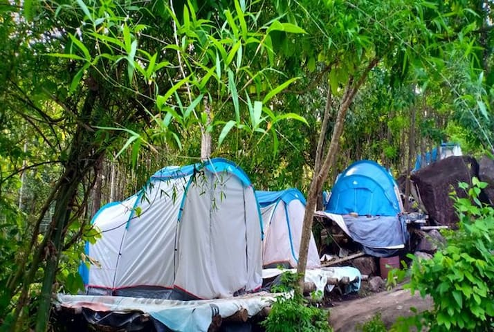 tent stay in hill top with trekking wayanad