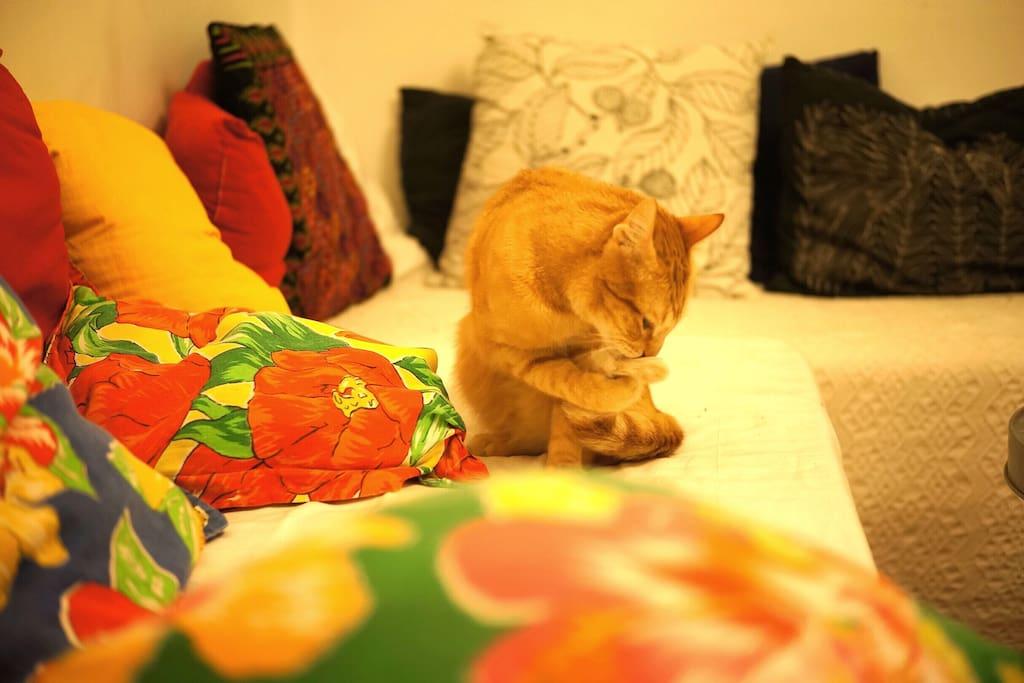 Mon chat Mixu.