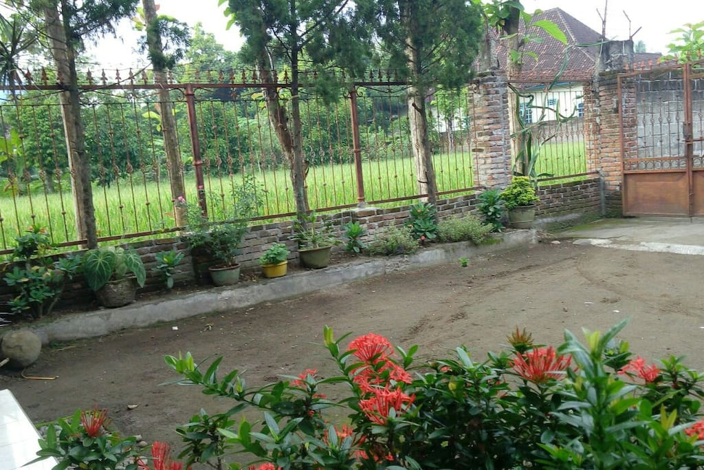 Home yard with rice view