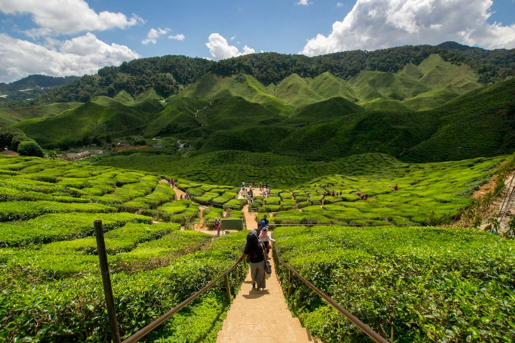 Tea plantations are just 3.6kms away from our place