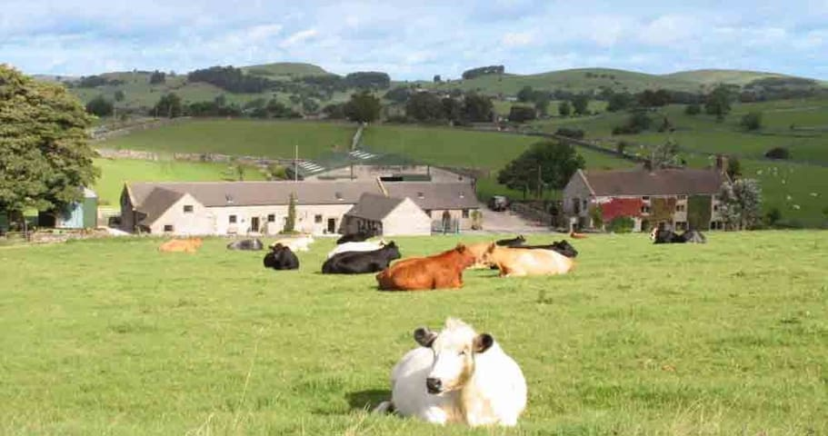 Lower Damgate Farm Exclusive.  Dovedale Groups 28+