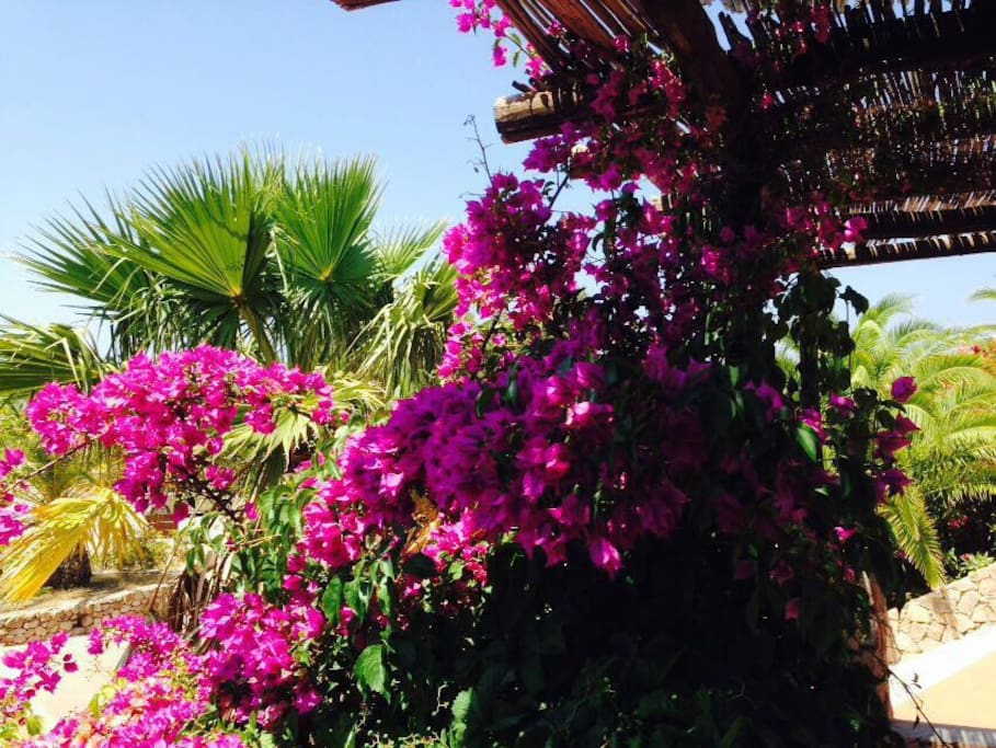 Flora al Villaggio
