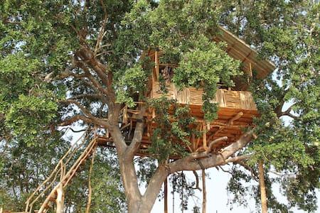 Yala Dream Park Best Treehouse and Campingsite - Hambantota - Trädhus
