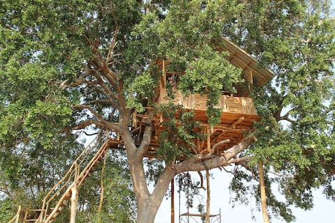 Yala Dream Park Best Treehouse and Campingsite