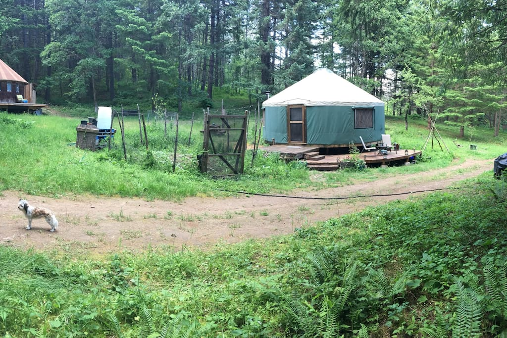 The Yurt nestled in our forest meadow neighbors the Round House. We have a tenant that lives there.