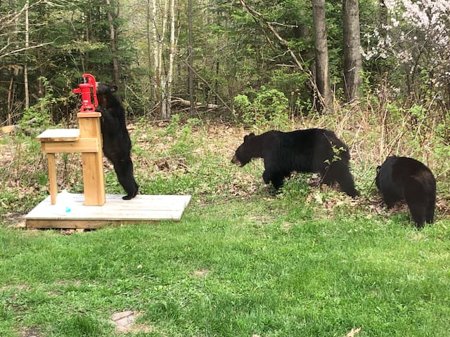 Bears inspecting the new pump, spring 2019.