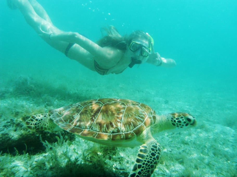 Famous beaches. Swim with the turtles!
