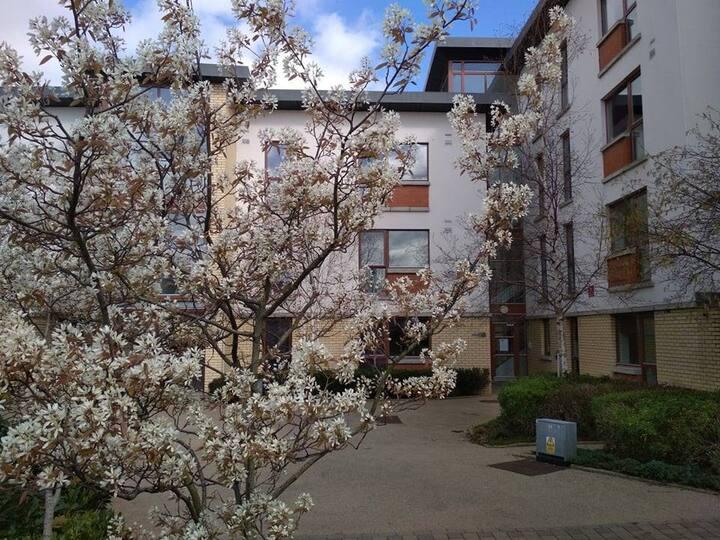 Apartment 68 room 4 Shanowen Square