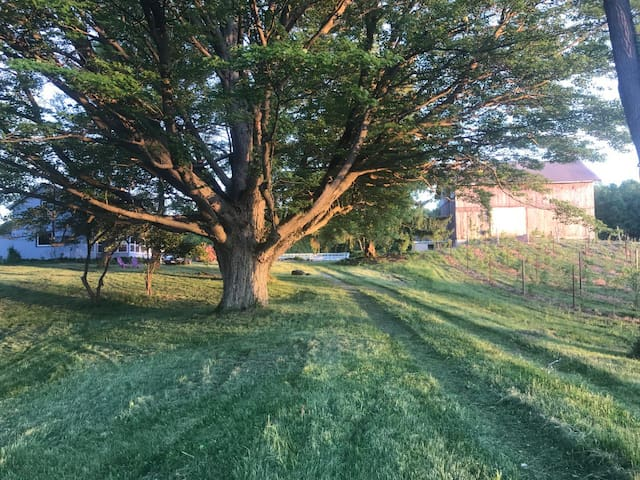 our private entrance to farmhouse for you...55 acres of woods and open areas behind pool and house- we have croquet or please bring fav yard game..or enjoy pool area....lots to do or do nothing!