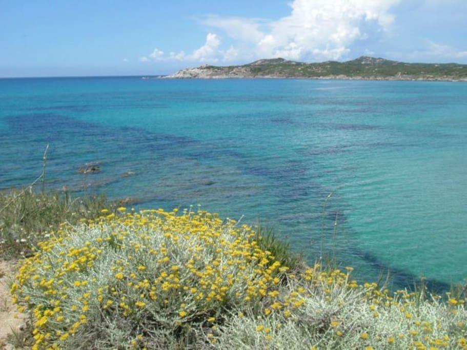 Spiaggia_Rena_Majore