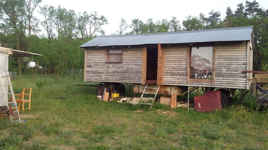 Schäferwagen mit Terrasse auf der Yakplantage