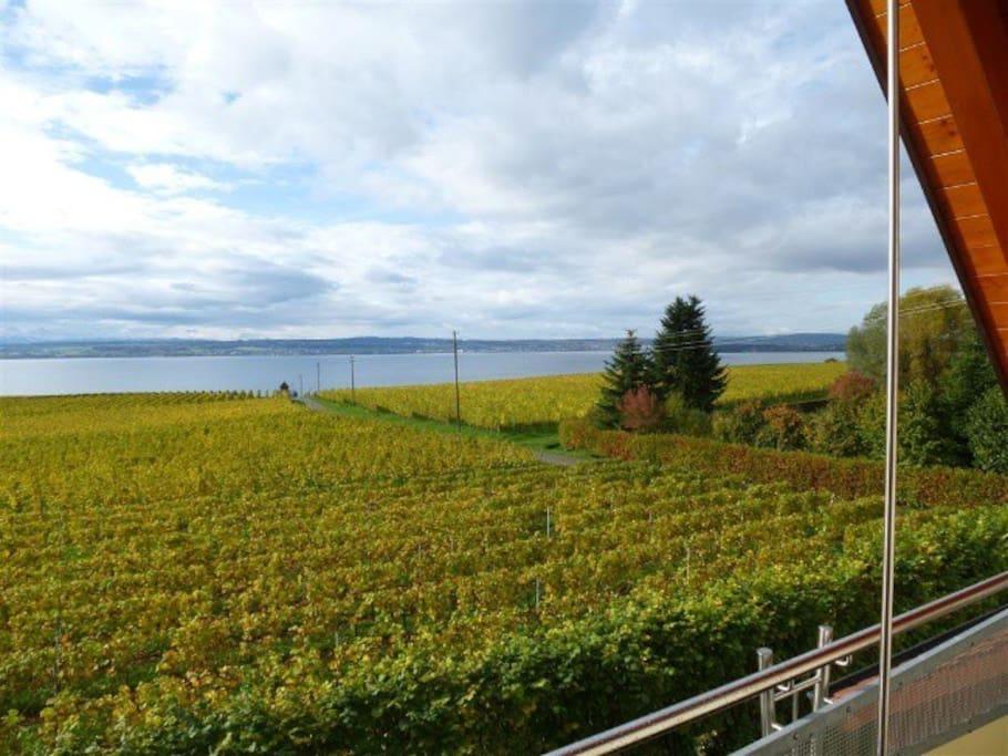 Blick vom Balkon auf Weinberge und See