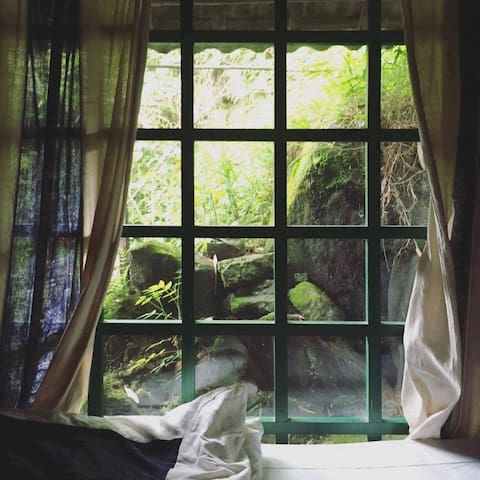 View of moss covered stone from the windows.