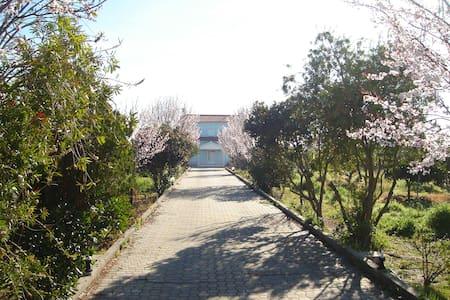 B&B Elodie's Country House - Grândola - Villa
