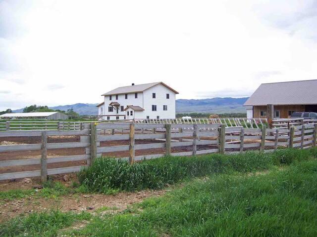 Amish Daily- Family Room