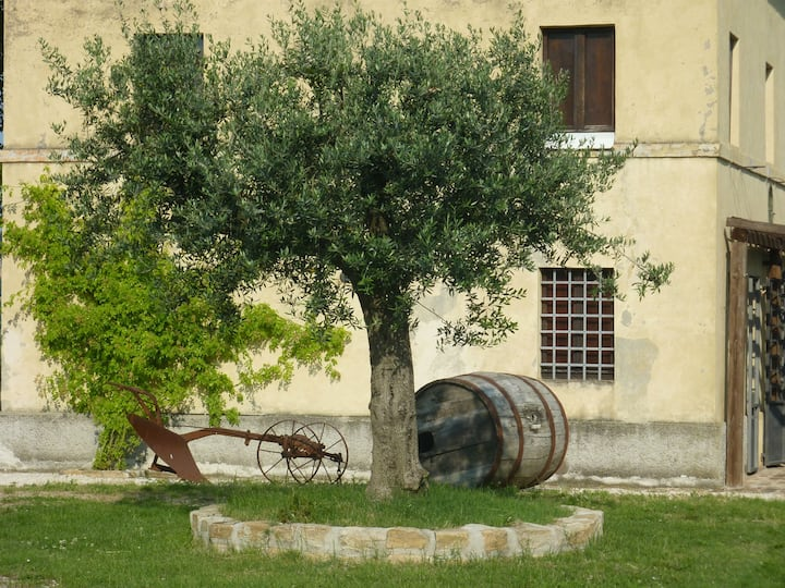 Casale Oliva: landscape of olive and cherry trees