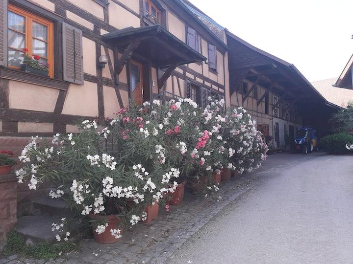 Centre Alsace ;  chez l'habitant ( 4 pers )
