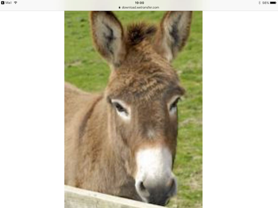 Jerry , one of our donkeys