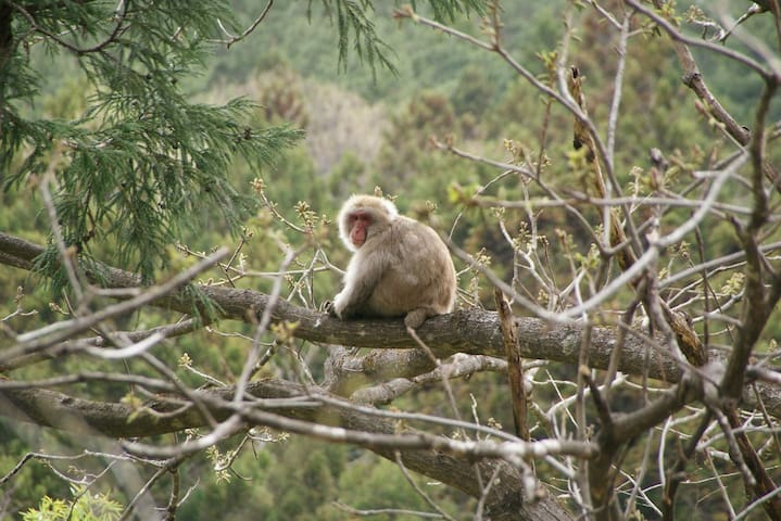 Wakaho is a treasure trove of wildlife 若穂には野生の猿もたくさんいます。