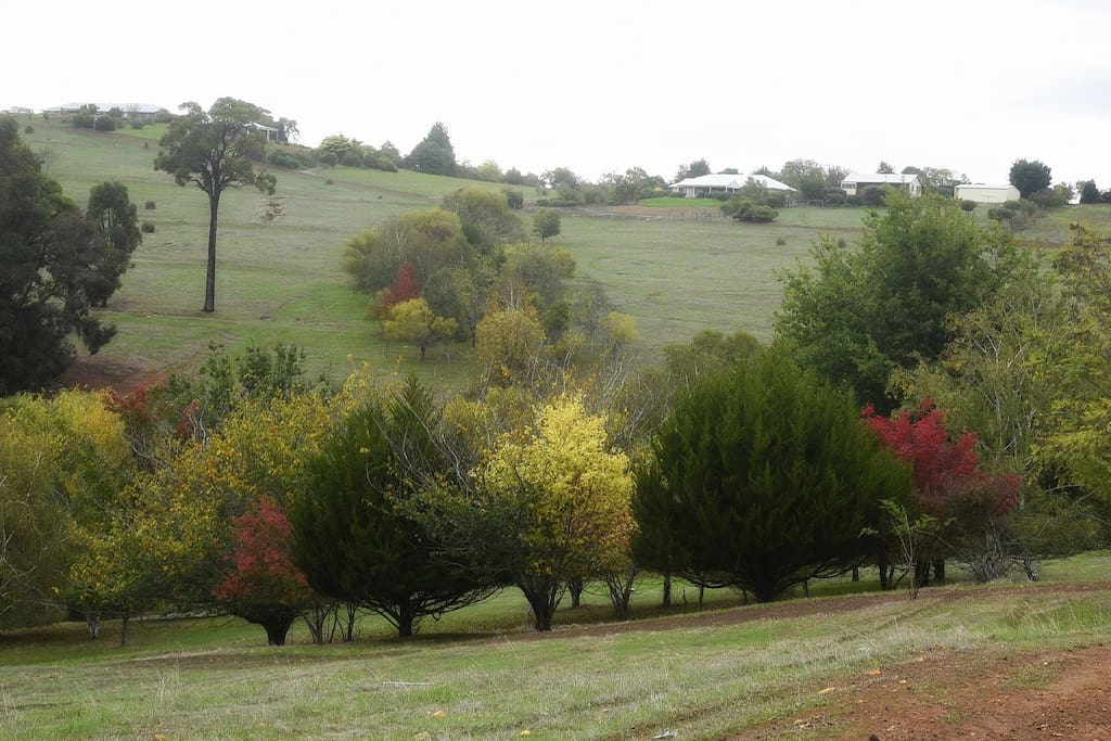 Beautiful autumn colours across the valley from my house.