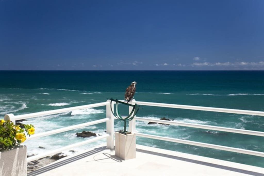 If you are lucky, you can meet a falcon that visits the top terrace.