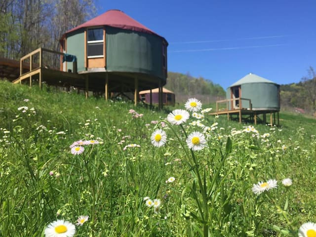 Eco-Chic Mountain Yurt Retreat Center
