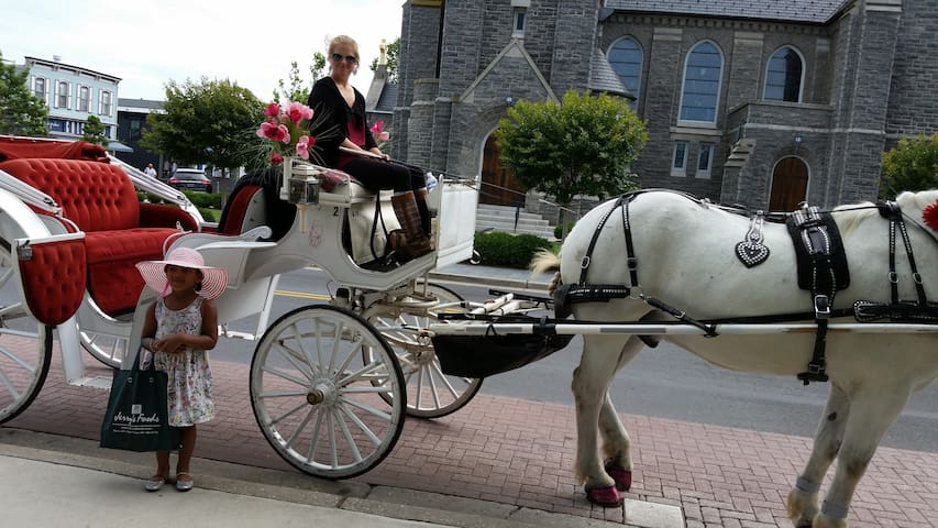 Enjoy proud horses' fine carriages and extraordinary tours detailing Cape May's historical streets.