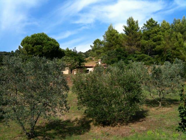 Cottage im Olivenhain mit Meerblick - Riparbella - House