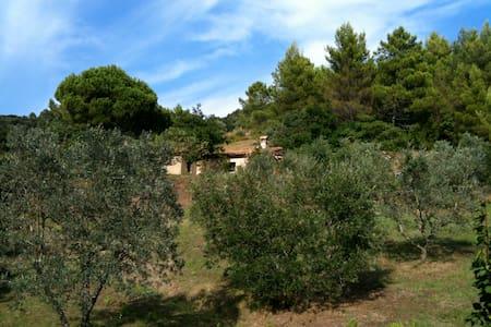 Cottage im Olivenhain mit Meerblick - Casa