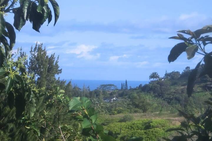 Treehouse Cabin Wraparound Porch& Ocean view - Maui County - Cabin