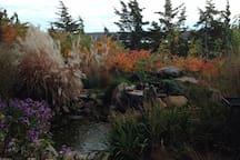 Fall garden, pond