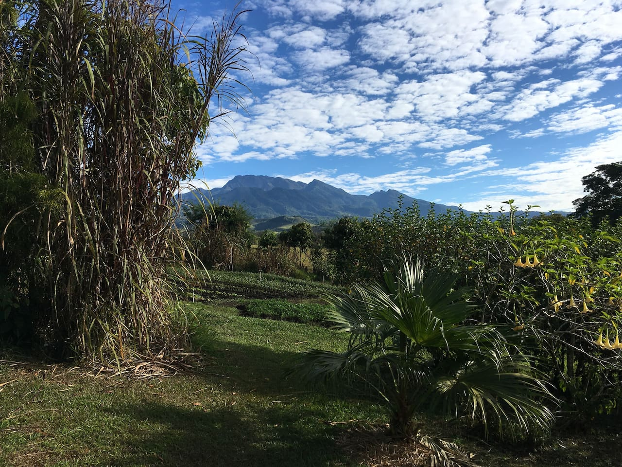 View to Volcan Baru from farm
