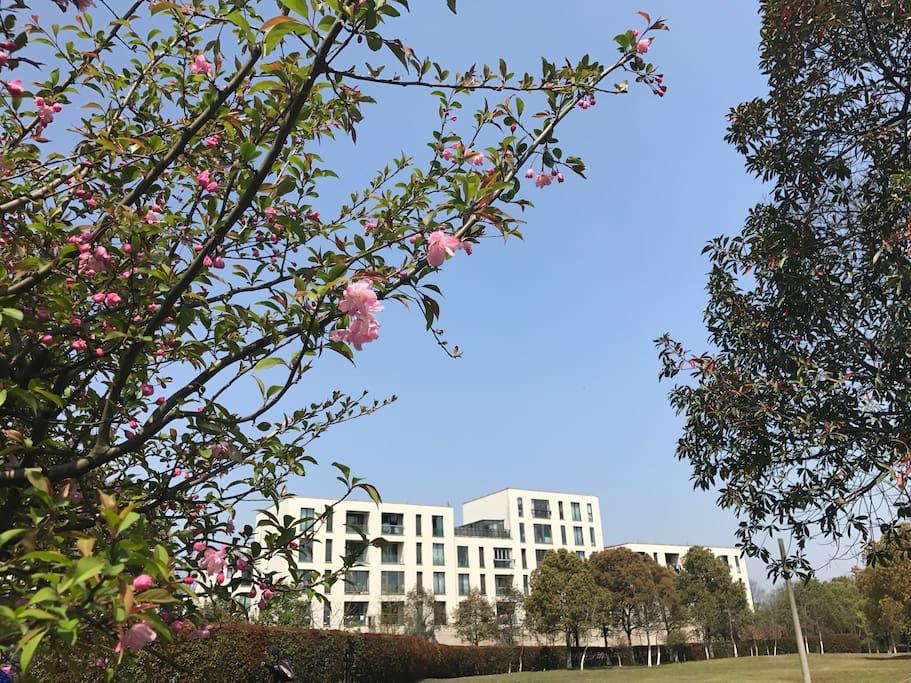 春天,小区旁边的白鹭公园花都开了