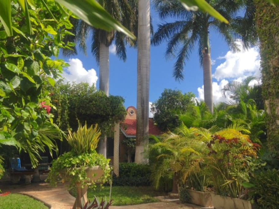 Garden, Nature, Palms, and the view to the entrance or TEQUILA HOUSE,  to TEQUILITA Apartment.