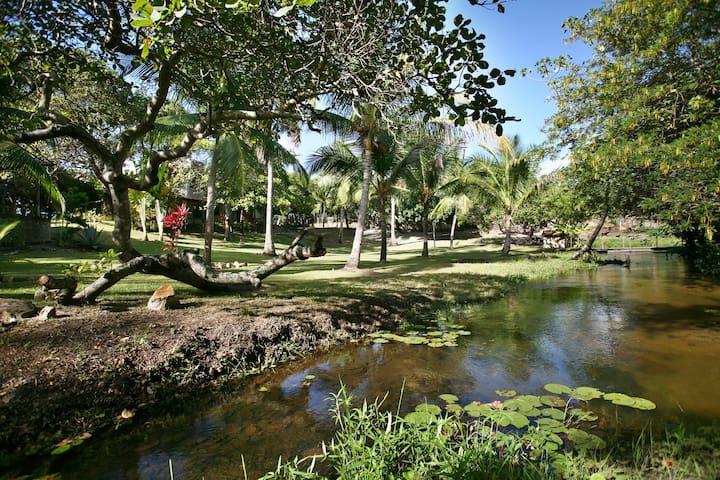 O rio da Toca do Jacaré