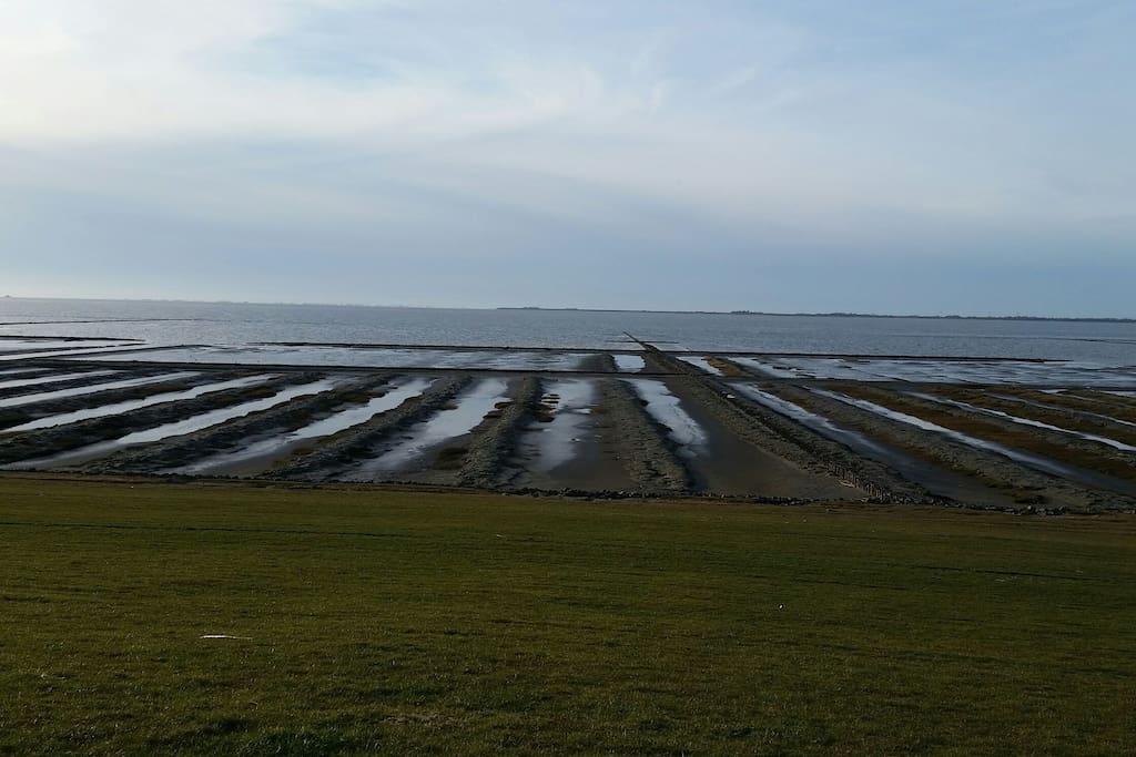 Unsere Deichaussicht auf die Nordsee in 1,5 km Entfernung.