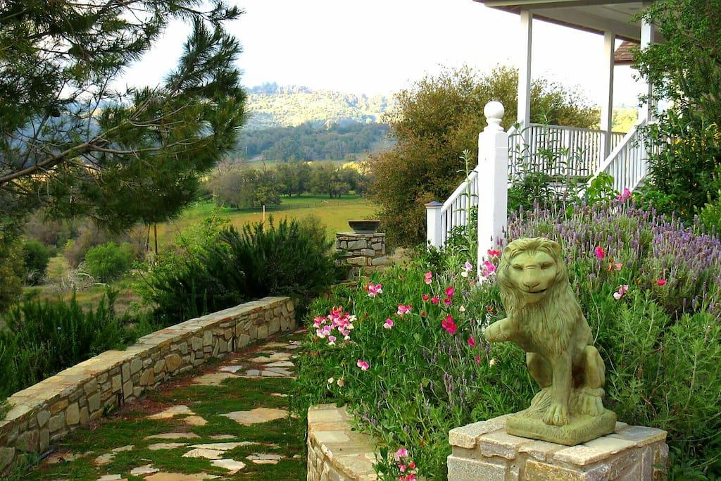 Front walkway native plants and herb garden