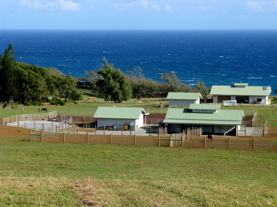Hawaiian Oceanfront Nature Retreat Bungalows for Rent in