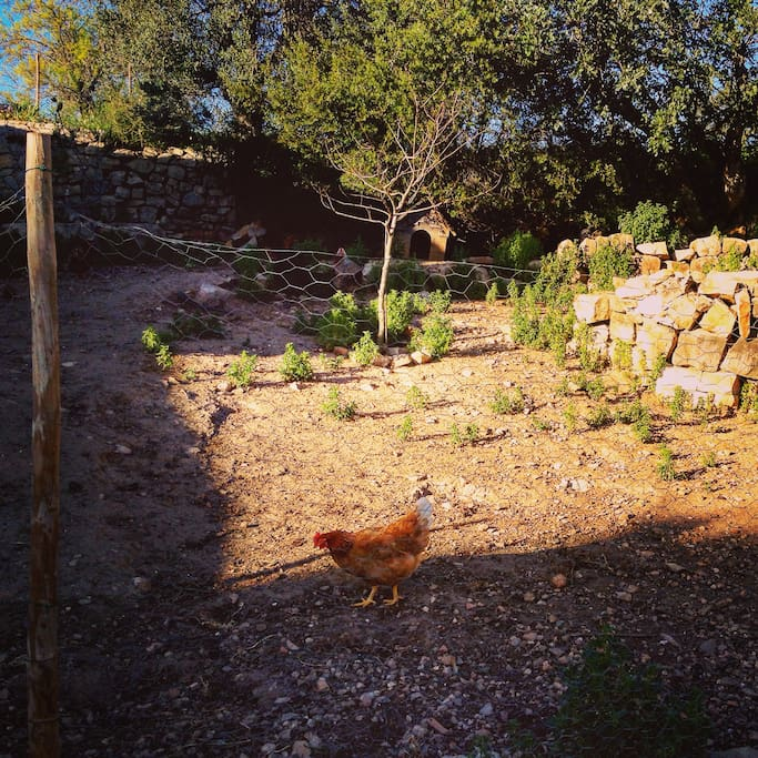 huge window view on our many chickens