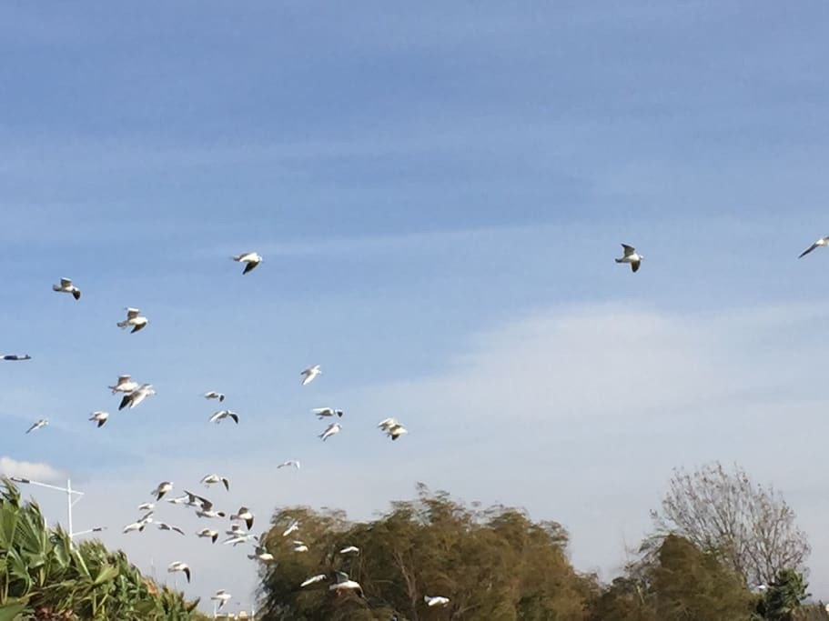 Seagulls often bring us nice dream and special feeling!