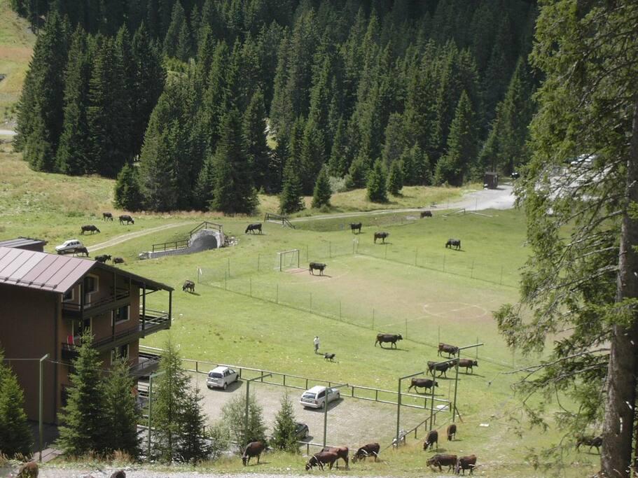 La casa vista dalla pista da sci in estate