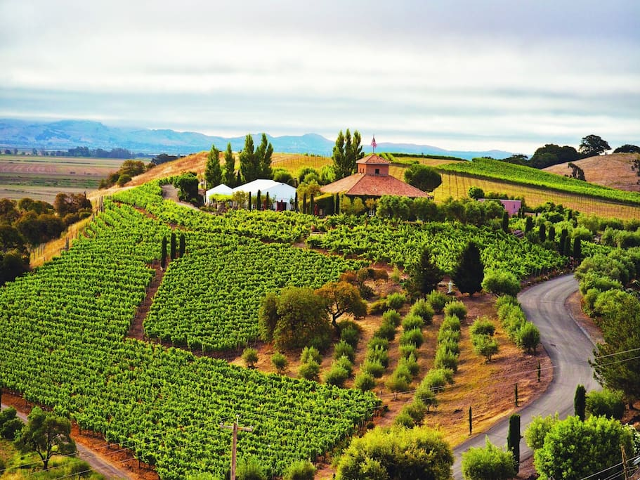 One of the majestic wineries you can find nearby