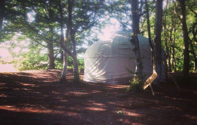 Rustic yurt in hidden woodland - Thorington - Yurt