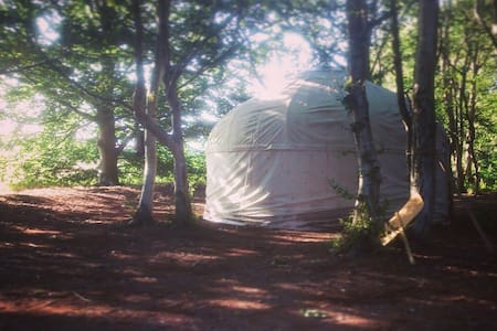 Rustic yurt in hidden woodland - Thorington - Khemah Yurt
