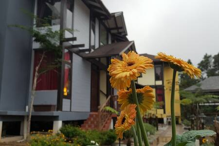 Casa Loma Resort - Tanah Rata